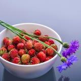 Forest Strawberries Fotografia de Stock Royalty Free