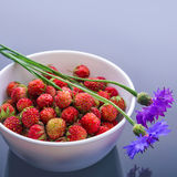 Forest strawberries Royalty Free Stock Photography