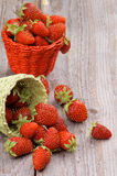 Forest Strawberries Stock Images