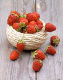 Forest Strawberries Royalty Free Stock Photo