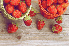 Forest Strawberries Stock Photography