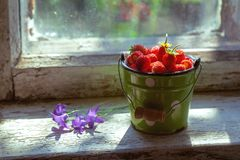 Forest strawberries in a small bucket royalty free stock photos