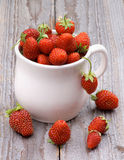 Forest Strawberries Stock Photos