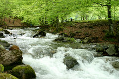 Forest stream. Spring forest stream with clear water and wooden bridge stock photography