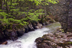 Forest stream. Spring forest stream with clear water and wooden bridge royalty free stock images