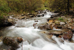 Forest stream. A small forest stream in west China Stock Image