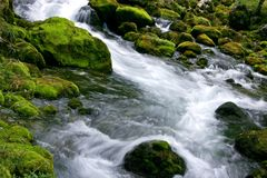 Forest Stream. Running over mossy rocks Royalty Free Stock Photo