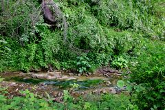 Forest Stream Stock Foto