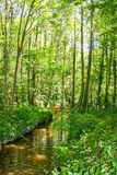 Forest Stream photos stock