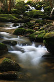 Forest stream. Stream with boulders in the forest Royalty Free Stock Image