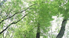 Forest Stream video d archivio