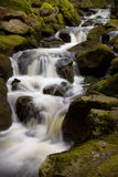 Forest stream. Slow shutter creating motion effect Stock Photo