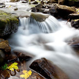 Forest stream. Beautiful forest stream with pure water Royalty Free Stock Photo