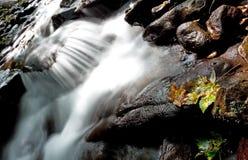 Forest stream Stock Photos