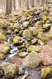 Forest stream. Running over mossy rocks Stock Photo