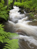 Forest stream. Wild stream in the forest Stock Image