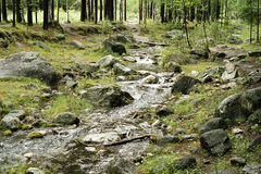 Forest stream. A stream in a siberian forest near Lake Baikal Stock Photo