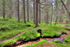 Forest with stream Stock Images