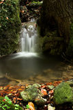 Forest stream. And motion blured waterfall Royalty Free Stock Photos