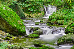 Forest stream. Tranquil forest stream and waterfall