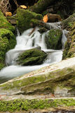 Forest stream. Called White Opava, Moravian mountains in Czech Republic, Europe Royalty Free Stock Images