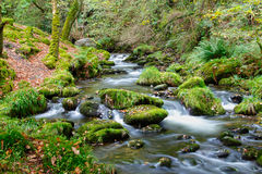 Forest stream. Fairytale like tranquil forest stream Stock Photo