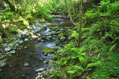 Free Forest Stream Stock Image - 25337181