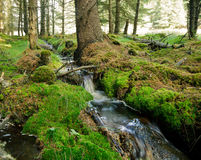 Forest stream. Small forest stream in Scotland Stock Images