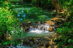 Forest Stream Fotografering för Bildbyråer