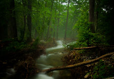 Forest Stream Stockfoto