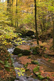 Forest stream. Idyllic forest stream in autumn colors Stock Image