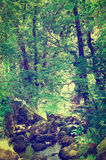 Forest Stream Imagens de Stock Royalty Free
