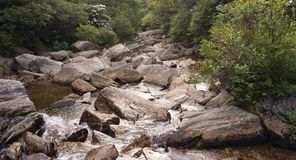 Forest Stream Imagens de Stock