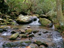 Forest Stream Fotografia de Stock Royalty Free