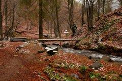 Forest Stream royalty-vrije stock foto's