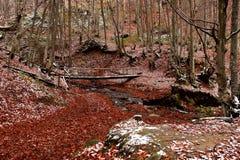 Forest Stream stock fotografie