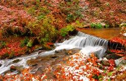 Forest Stream Image libre de droits