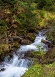 Forest Stream Stock Afbeelding