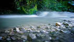Forest Stream Fotografia de Stock Royalty Free