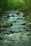 Forest Stream. A stream running down a rocky creek Royalty Free Stock Photography