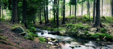 Forest Stream Fotografia Stock