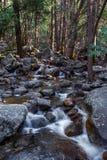 Forest Stream Fotografía de archivo libre de regalías