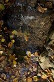 Forest Stream Stockbilder