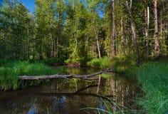 Forest Stream imagenes de archivo
