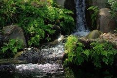 Forest Stream Photo libre de droits