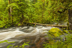 Forest Stream Immagine Stock