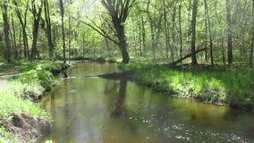 Forest Stream almacen de video