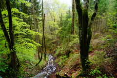 Forest Stream Stockbild