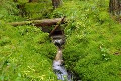 Forest Stream Royalty-vrije Stock Afbeeldingen