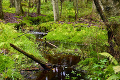 Forest Stream Stock Afbeeldingen
